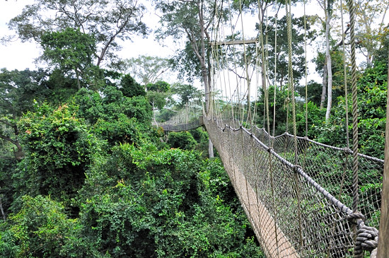 The walkway is made up of cargo net supported aluminium ladders with planks on. Besides the one at Kakum there are said to be four others worldwide located ... & Kakum National Park - Rain forest Ghana